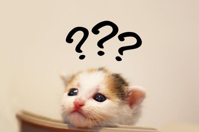 ミノキシジルの仕様を悩むネコ