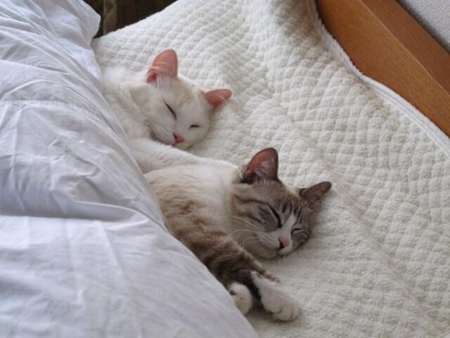 充実した睡眠